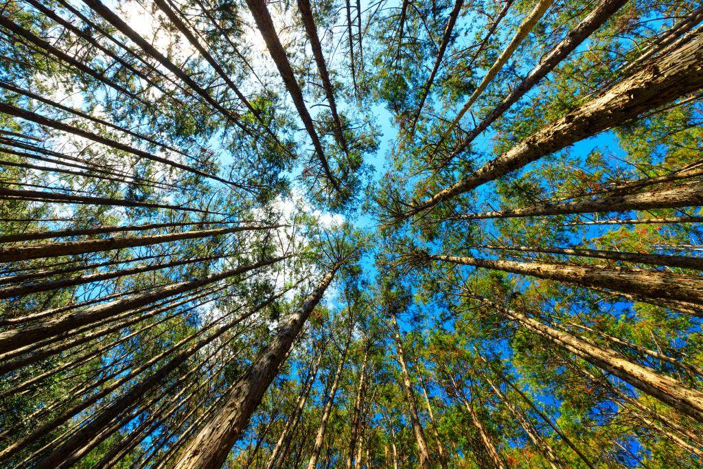 Banho de Floresta no Japão: relaxamento para o corpo e a alma